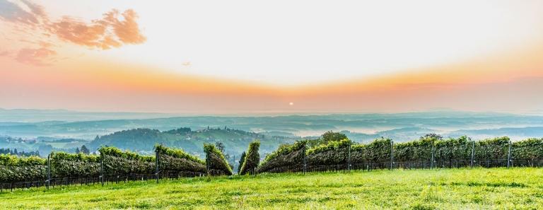 Ausblick Weingärten vom Weingut Langmann, Langegg bei St. Stefan ob Stainz, Schilcherstraße