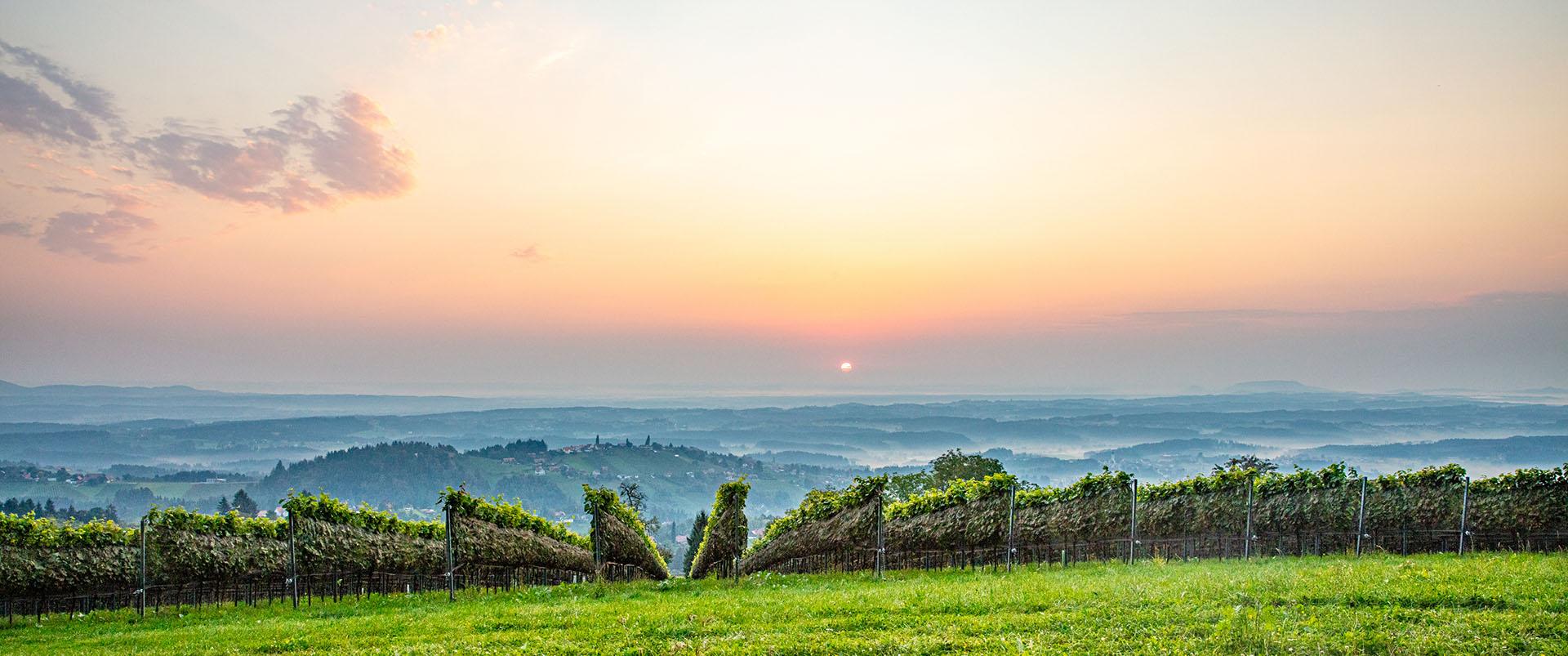 Weingärten vom Weingut Langmann, Langegg bei St. Stefan ob Stainz, Schilcherstraße
