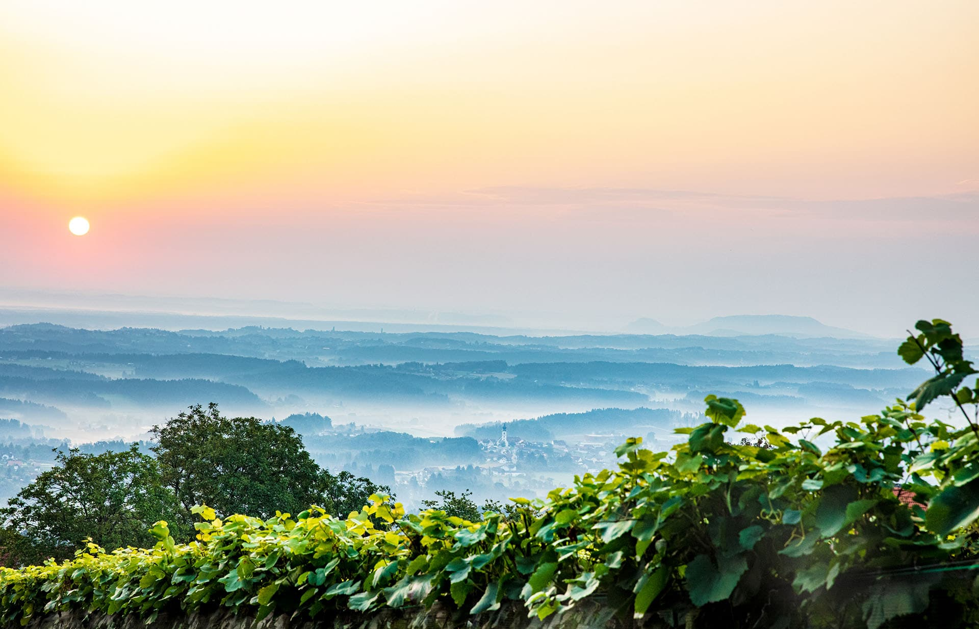 Weingartenaussicht auf St. Stefan ob Stainz