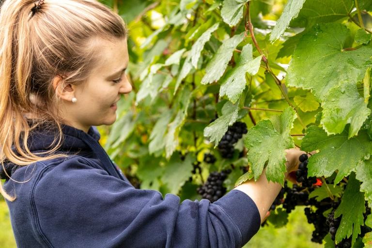 Verena Langmann, die nächste Generation arbeitet schon mit, Weingut Langmann